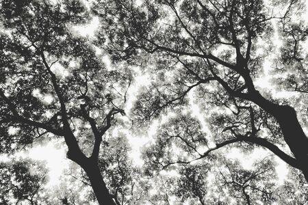 dappled: Shadow of tree