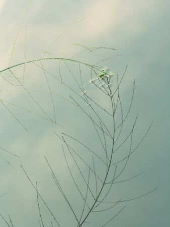 reflecting: vintage color background with grass flower and  reflecting into the water