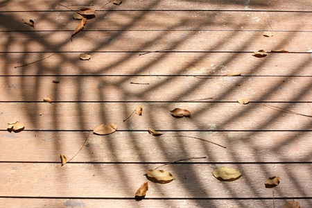 nearness: tree shadow on the wood floor
