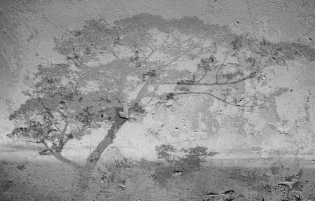 nearness: Tree shadow on a white wall