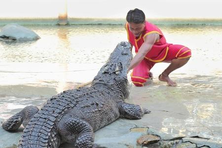 samutprakarn: SAMUTPRAKARN-THAILAND : April 2 ,2016 Crocodile show and man exciting and danger at crocodile zoo farm
