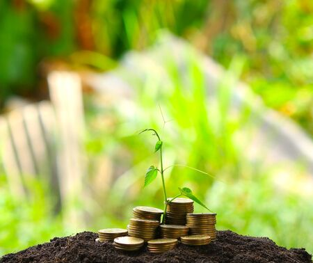 capital gains: money coins,Business investment growth concept,saving concept