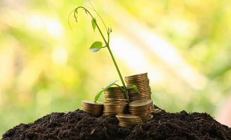 protected plant: money coins,Business investment growth concept,saving concept