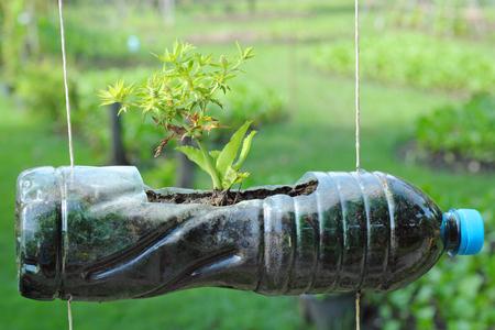 plant in diy pots of bottle