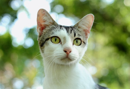 big eye: big eye of cat