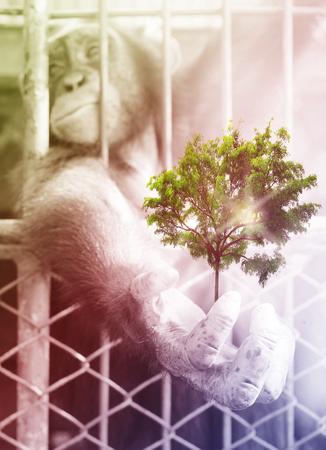 chimpances: doble exposición creativa, Manos de chimpancés con árboles verdes, tono de época