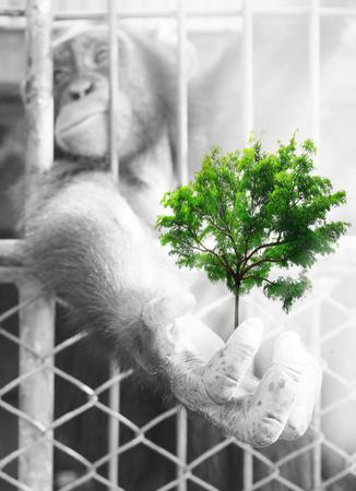 chimpances: doble exposición creativa, Manos de chimpancés con los árboles verdes Foto de archivo