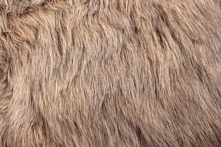 stylishness: rabbit fur as background Stock Photo