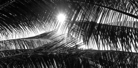 caribbean beach: Palm tree branch against the light with Style black and white