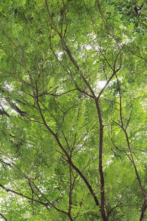 haunt: Silhouette tree on daylight
