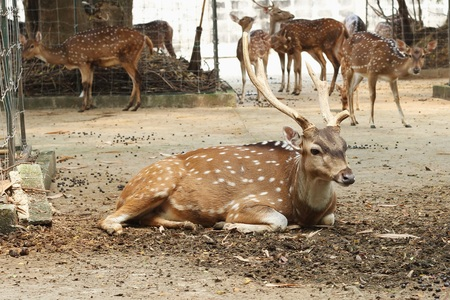 blotched: Cute spotted fallow deer Stock Photo