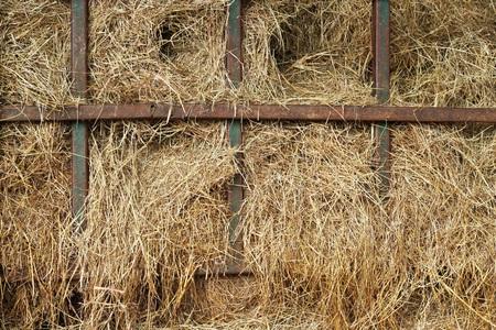 hayrick: dry yellow hay in farm