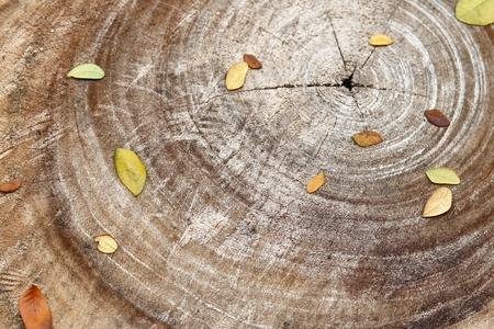tree bark texture in summer
