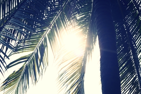 Palm Leaves Branches in Sun Light Natural Background 스톡 콘텐츠