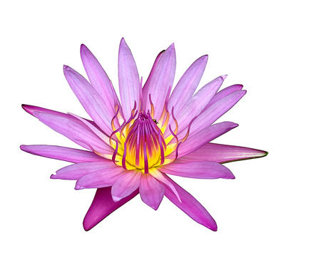 Close up blooming water lily or lotus flower isolated on white background photo