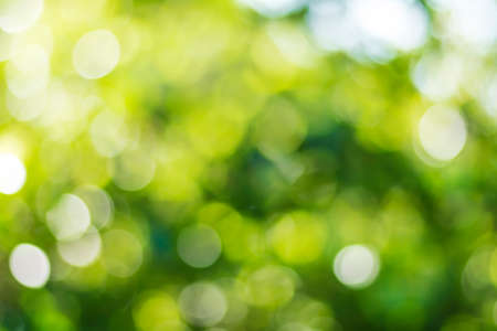 Sunny abstract green nature background, selective focus Stock fotó