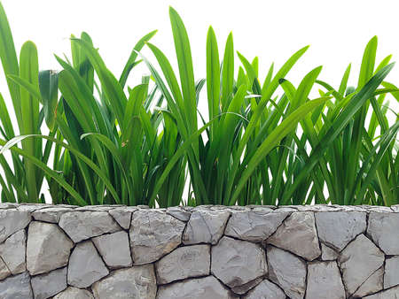 Green leaf plant on the stone wall