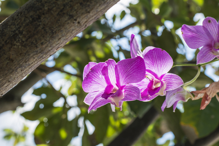 Sweet color orchid in soft color and blur style for background photo