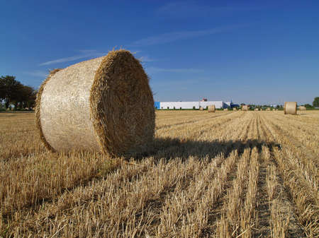 A field with a bale of straw       photo