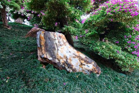 petrified: Petrified Wood Gardening