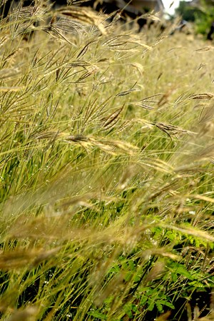 reeds of grass photo