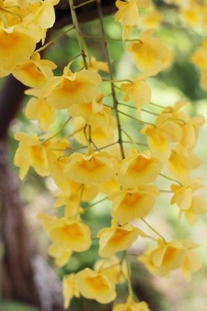 tunable: Beautiful wild orchids Stock Photo