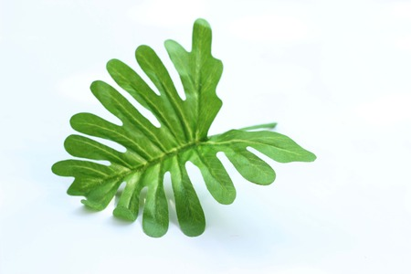 colon cleansing: Sabres green leaves in a black frame.