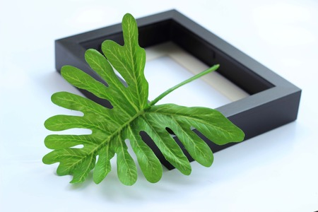 tunable: Sabres green leaves in a black frame.