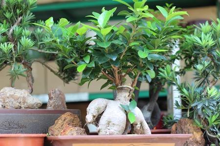 nurseries: succulent planter