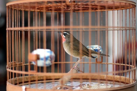 bird in the wooden cage, taken in Hong Kong Bird Market