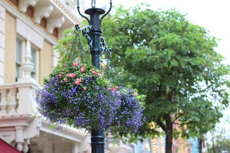 tunable: Beautiful hanging flower pots outdoors.
