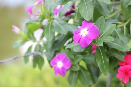 Wall mounted hanging baskets with a range of summer flowers photo