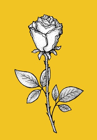 rose tattoo: Rose. Art for t-shirt design with contrast bright background. Hand drawn, pen and ink. Also suitable for tattoo, poster, postcard, valentines day greeting card