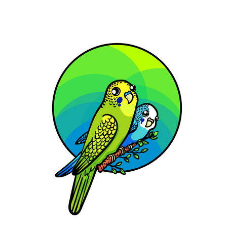 mimicry: Bright budgie of green and blue colors. Animal art, cute cartoon style, vector hand drawn illustration. Suitable for pet shop or zoo ads, label design or bird food package element