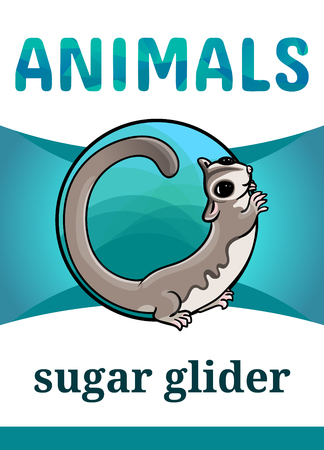 Printable animal flash card, vector illustration. Suitable for teaching children new words. Adorable sugar glider, cartoon style