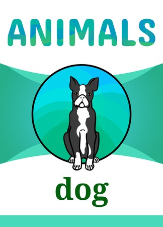 Printable animal flash card, vector illustration. Suitable for teaching children new words. Boston Terrier, dog breed, cartoon style