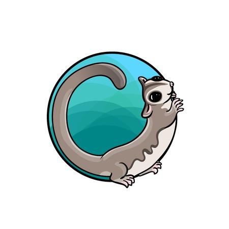 possum: Animal art, cute cartoon style, hand drawn vector illustration. Adorable sugar glider, cartoon style