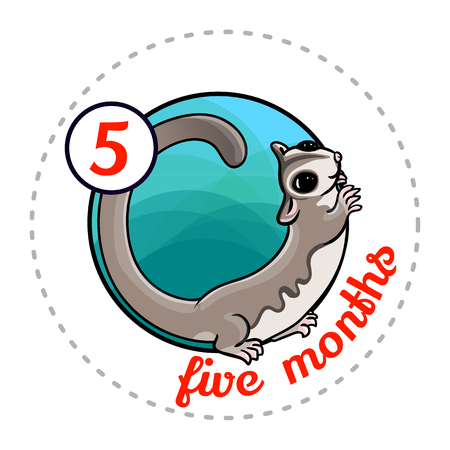 Monthly baby sticker. Cute cartoon animal illustration for little boy or girl. First year, five months. Adorable sugar glider