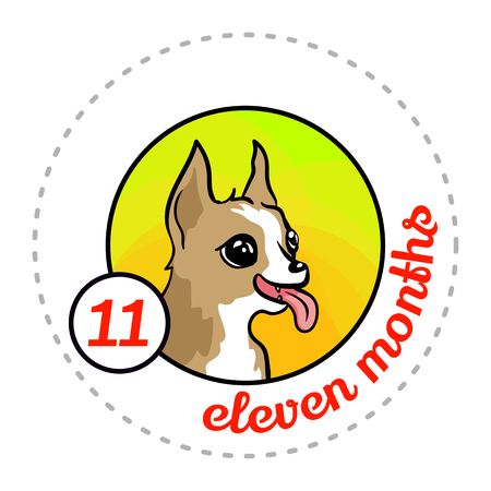 Monthly baby sticker. Cute cartoon animal illustration for little boy or girl. First year, eleven months. Happy Chihuahua puppy. Dog breed Illustration