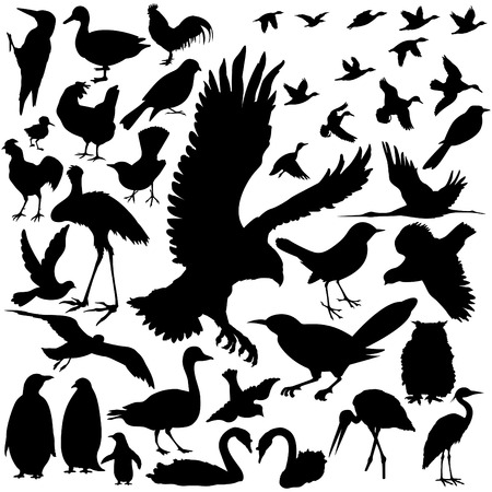 39 pieces of detailed vectoral bird silhouettes. Stock Vector - 4862679