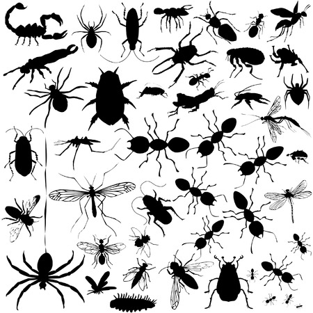 37 pieces of detailed vectoral bug silhouettes.