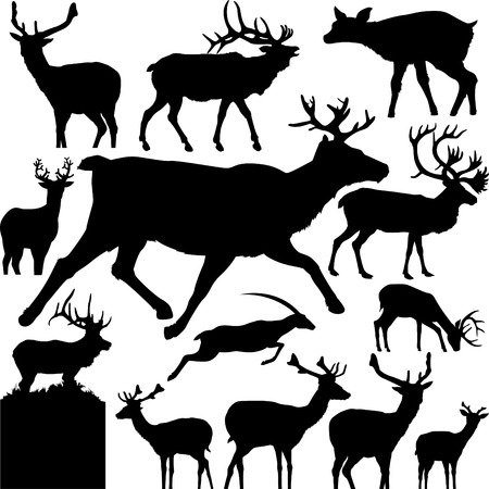 13 pieces of detailed vectoral deer silhouettes. Vector