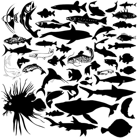 rainbow trout: 46 pieces of detailed vectoral fish and sea animal silhouettes. Illustration