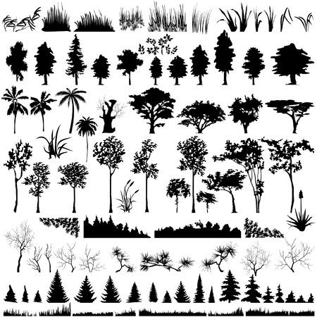 Vectorielle détaillée arbre, feuilles, branches et d'herbe silhouettes.