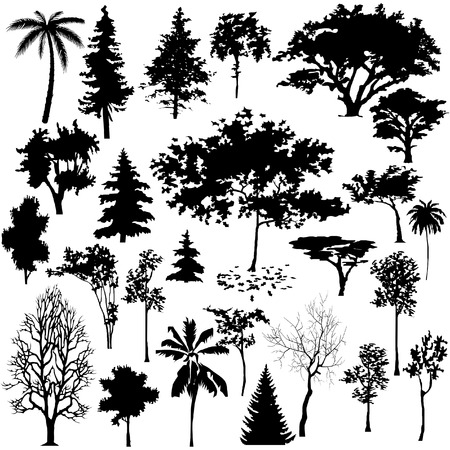 beech tree beech: Detailed vectoral tree silhouettes