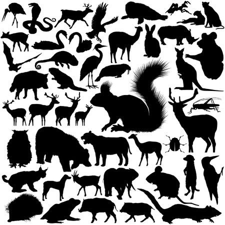 46 pieces of detailed vectoral wild animal silhouettes Illustration