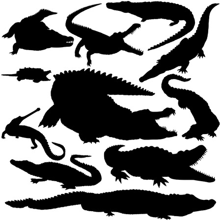 11 pieces of detailed vectoral crocodile silhouettes