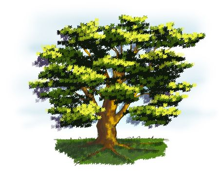 rooted: Illustration of a old tree in springtime