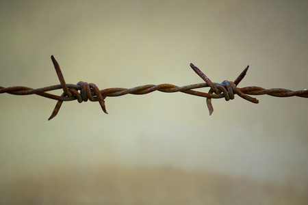 barb wire: barbed wire Stock Photo