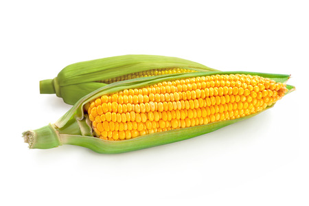 Maize corns isolated on a white background.